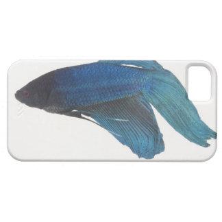 Betta Fish or Male Blue Siamese Fighting Fish iPhone SE/5/5s Case