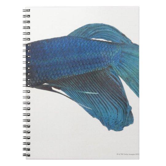 Betta Fish or Male Blue Siamese Fighting Fish Notebook