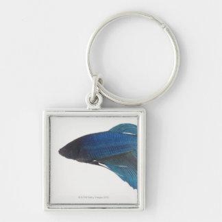 Betta Fish or Male Blue Siamese Fighting Fish Silver-Colored Square Keychain