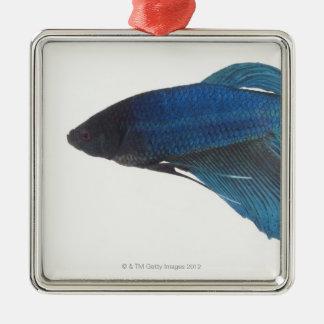 Betta Fish or Male Blue Siamese Fighting Fish Square Metal Christmas Ornament