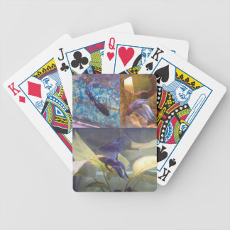 Betta fish playing cards. bicycle playing cards
