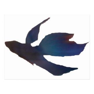 betta fish postcard