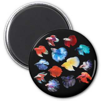 Betta Magnet