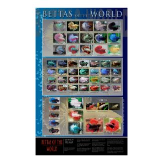 Betta Poster print