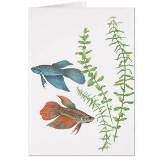 Betta splendens and Rotala indica White Card