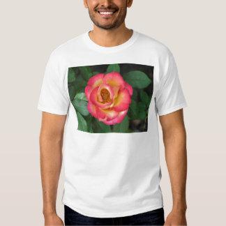 Betty Boop 140 Shirts