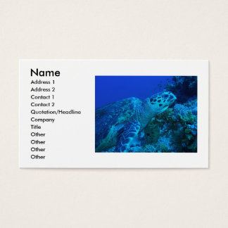 betty, turtle business card