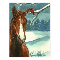 Between Friends Wild Horse Post Card