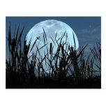 Between Moon and Marsh Postcard