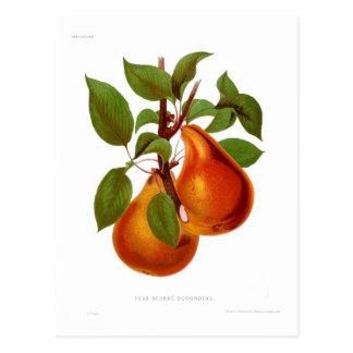 Beurre Durondeau Pear Postcard