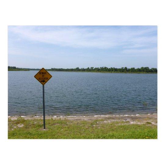Beware of Alligator Sign by pond Postcard