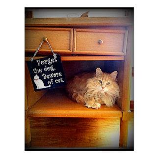 beware of cat postcard