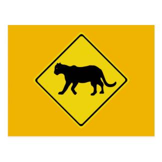 Beware of Panthers, Everglades, Florida, USA Postcard