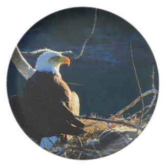 BEWB Eagle calvo con el bebé Platos Para Fiestas