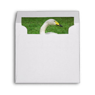 Bewick's Swan Sits In Perfect Green Grass Envelope