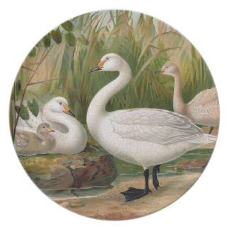 """Bewick Swan"" Party Plate"