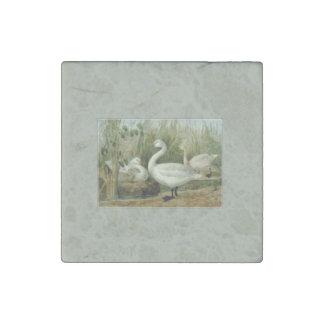 Bewicks Swans Stone Magnet
