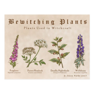 Bewitching Plants Postcard