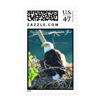 BEYR Bald Eagle Yukon River Stamp