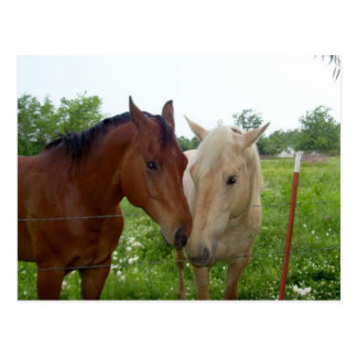 BFF Best Friends Forever - Horses Postcard