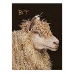 BFF postcard with sheep and chickadee