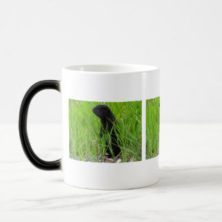 BGRO Black Ground Squirrel Magic Mug