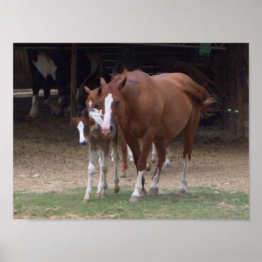 BH impresión del diseño de los caballos Impresiones