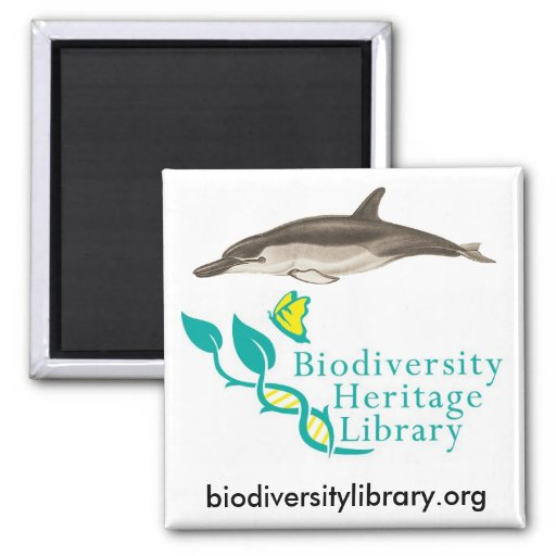 BHL Dolphin 2 Inch Square Magnet