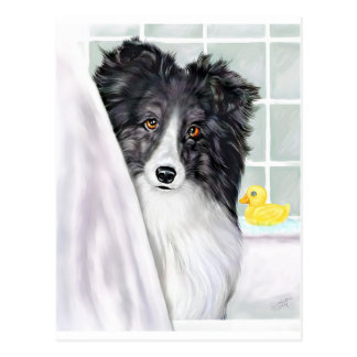 Bi Black Sheltie Bath Postcard