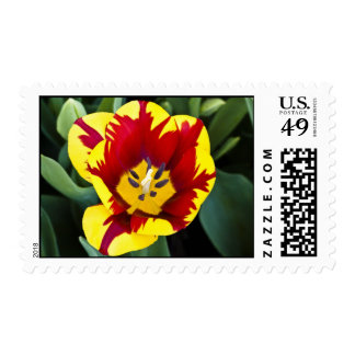 Bi-Color Tulip Postage Stamp