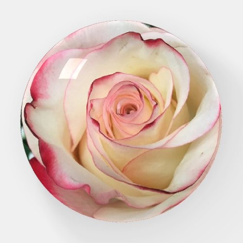 Bi-colored Blush Rose Paperweight