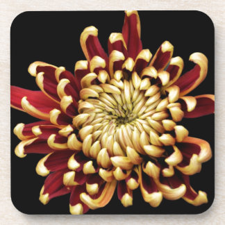 Bi-colored Chrysanthemum Coaster