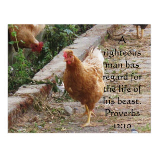 Bible quote  about Animal Cruelty Proverbs 12:10 Postcard