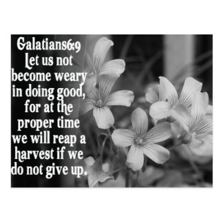 BIBLE SCRIPTURE GALATIANS 6:9 POSTCARD