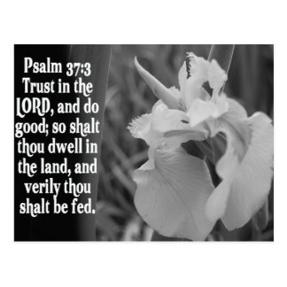 BIBLE SCRIPTURE PSALM 37:3 TRUST THE LORD POSTCARD