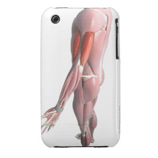 Biceps and the Triceps Brachii Case-Mate iPhone 3 Cases