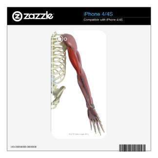 Biceps Brachii Skins For iPhone 4S