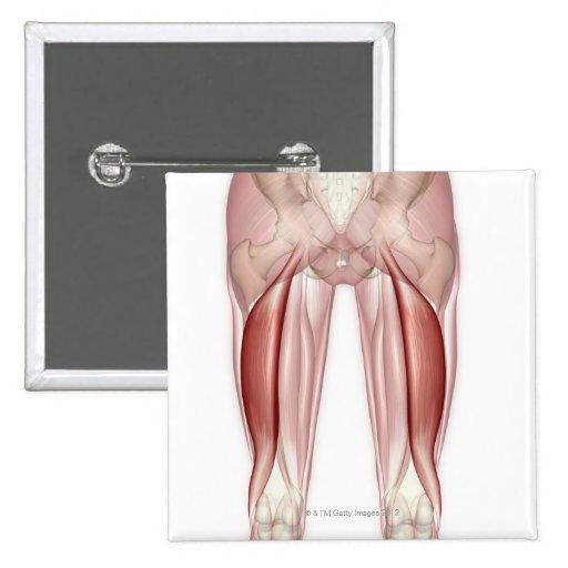Bíceps femoral pins