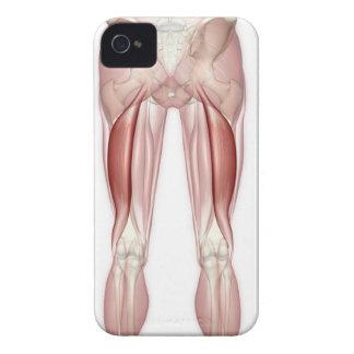 Biceps Femoris iPhone 4 Cases
