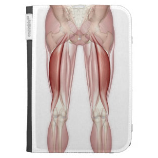 Biceps Femoris Cases For The Kindle
