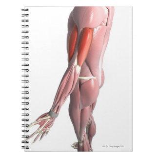 Bíceps y el tríceps - brachii spiral notebooks