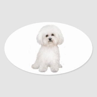Bichon (B) Oval Sticker