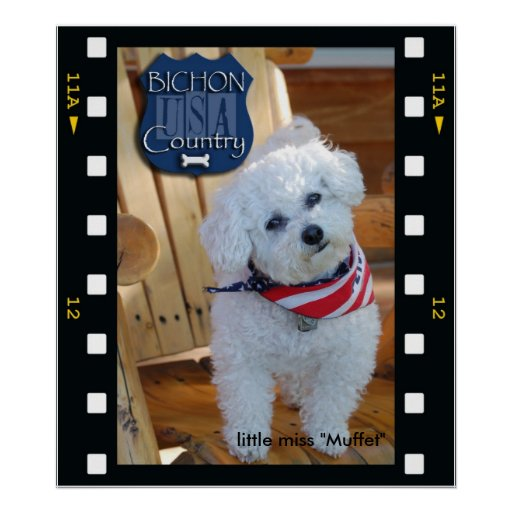 Bichon country with negative frame, little miss... poster