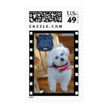 Bichon country with negative frame postage stamp