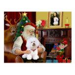 Bichon de Santa Frise (#1) Tarjetas Postales