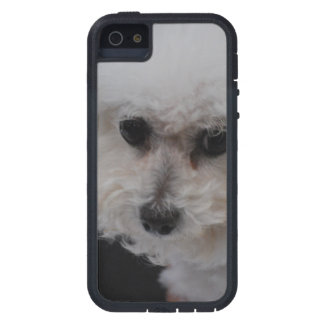 Bichon dulce Frise iPhone 5 Case-Mate Protectores
