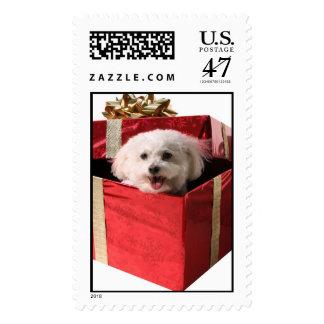 Bichon en una caja de regalo sello postal