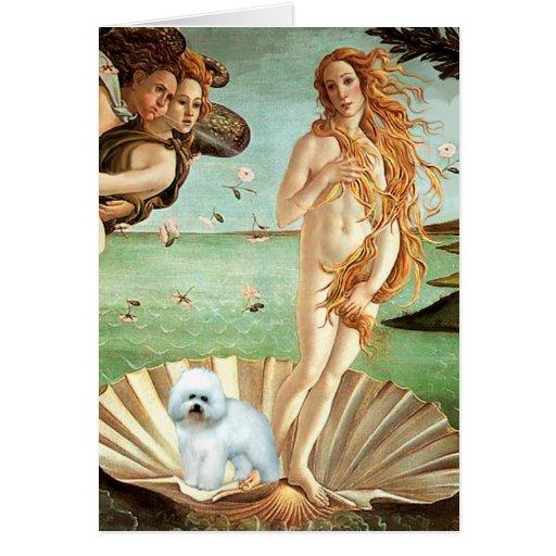 Bichon Frise 5 - Venus Greeting Card
