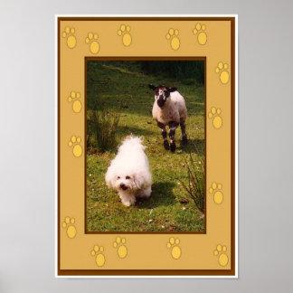 Bichon Frise and Lamb Poster