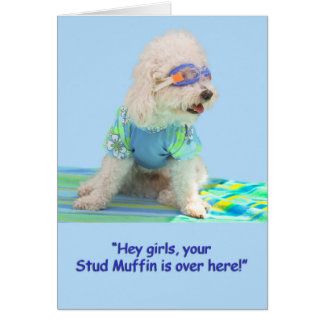 Bichon Frise Birthday Card